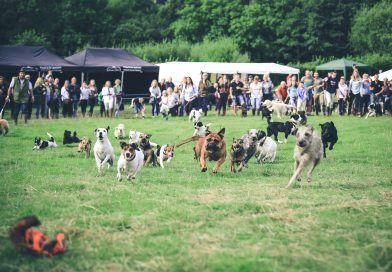 Dogs taking part in terrier racing at the Lustleigh Village Show