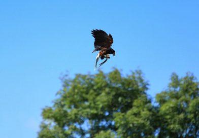 North Devon Falconry