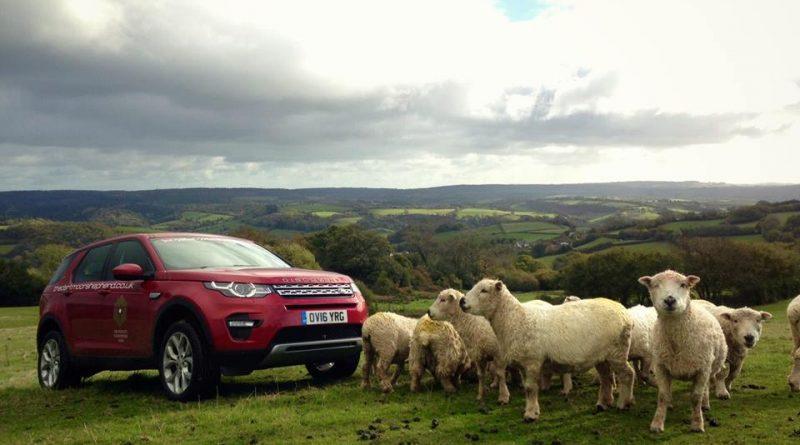 The Dartmoor Shepherd flock
