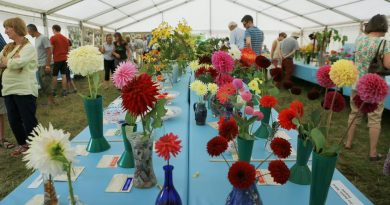 Horticultural displays at the 2016 Lustleigh Show