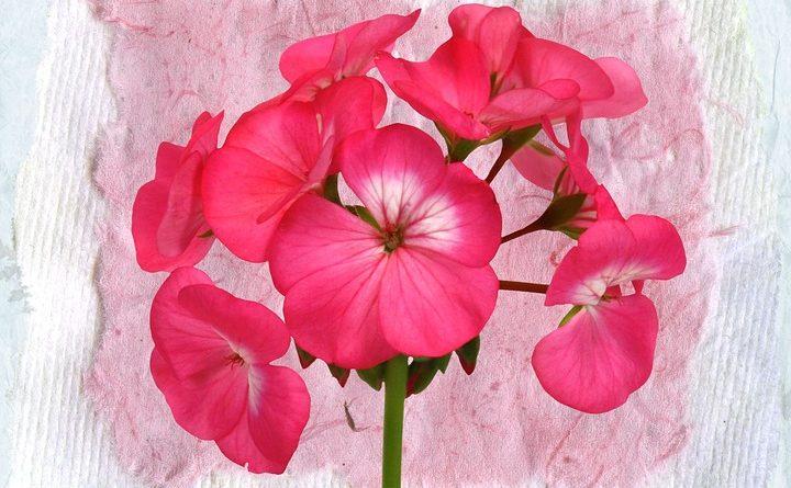 A pink decoupage flower