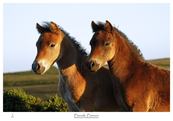 Two Foals in image captured by BRA Images