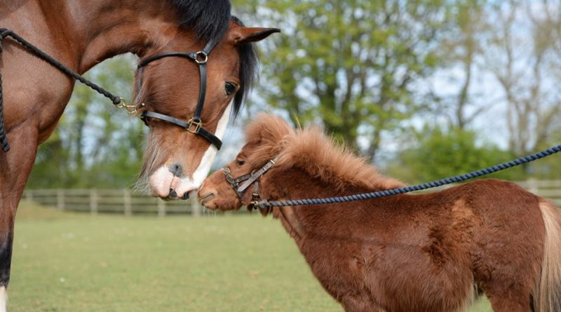 Horse and pony from the Mare and Foal Sanctuary