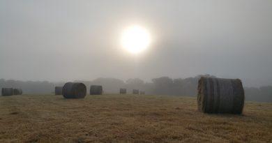 Oakcroft Farm Produce